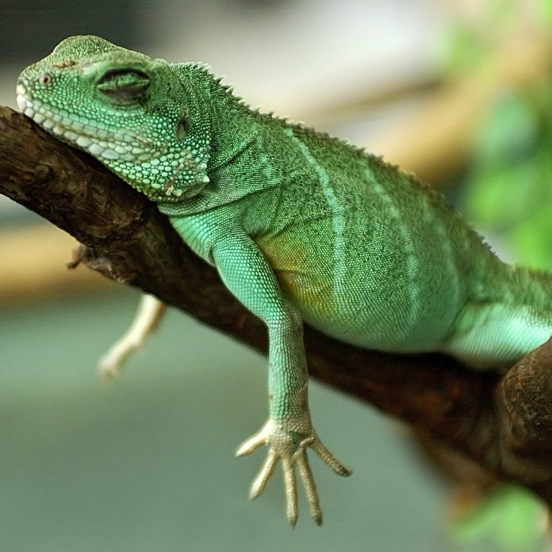 Sleeping Lizard - Self-Regulation and Embodiment in Bonn