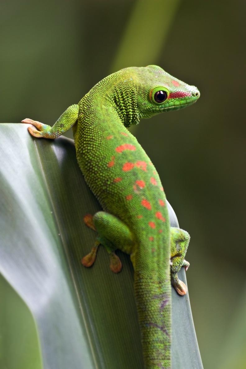 Gecko - wach entspannt und lebendig durch intakte Selbstregulation