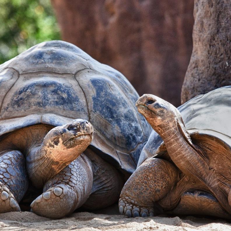 Schildkröten - Kontakt zum Leben nach Isolation durch Trauma