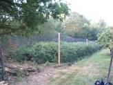 Unsere Heidelbeeren