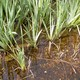 Wasseraufbereitung / überstauter Bodenfilter