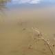 Badesee in idyllischer Lage mit starker Eintrübung durch Boden- und Tonmineralien z.B. Kaolin
