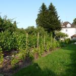 Blick auf den Weingarten
