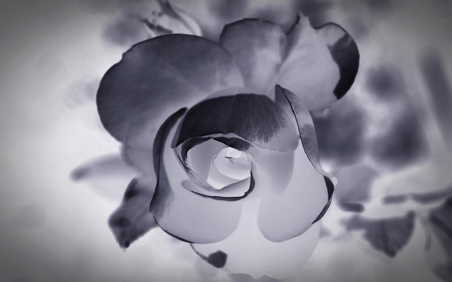 Mourning-1665772_1280